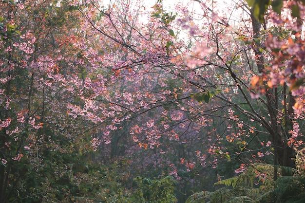 Himalaya blüht schönes buntes mit weichem licht in der morgenzeit
