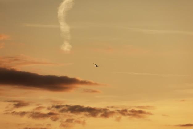 Himmel vor sonnenuntergang, vögel am himmel. vogelfliegen während sonnenuntergang und dämmerung vor niederschlagshimmelhintergrund