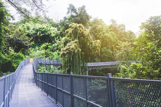 Himmelspaziergang im wald, metallzaunbrücke, wegweise, chiangmai, thailand