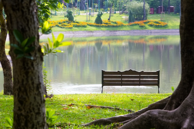 Hinter dem stuhl im park, mit bäumen und rasen und sümpfen