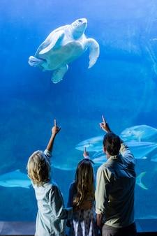Hintere ansicht der familie zeigend auf schildkröte in einem becken