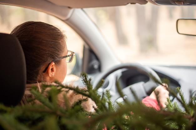 Hintere ansicht der jungen frau, die auto an einem frostigen wintertag mit einem weihnachtsbaum fährt