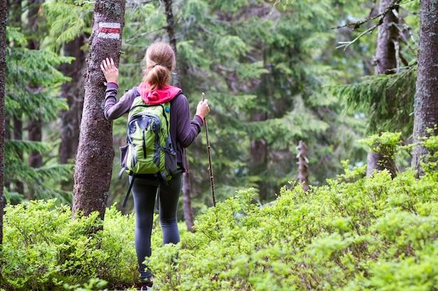 Hintere ansicht des dünnen athletischen blonden touristischen wanderermädchens mit stock und rucksack gehend durch beleuchteten durch sonne dichten immergrünen bergkiefernwald. tourismus, reisen, wandern und gesundes lebensstilkonzept.