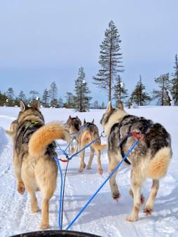 Hintere ansicht von den hunden, die auf schnee rodeln, bedeckte landschaft