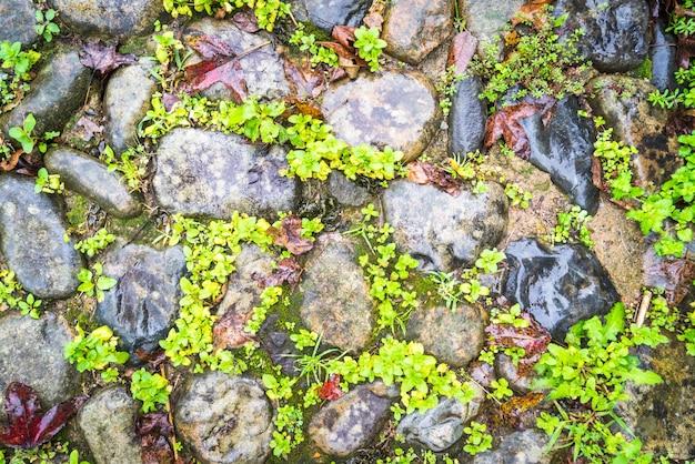 Hintergründe von pebble gehweg