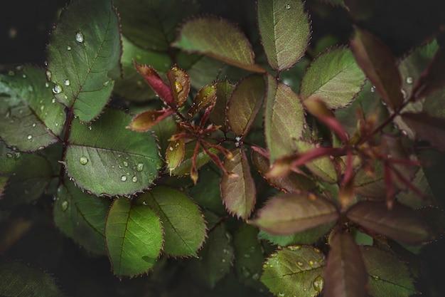 Hintergrund aus waldpflanzen und blumen