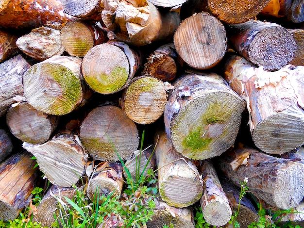 Hintergrund brennholz textur stämme von kiefernholz geschnittenen scheiben