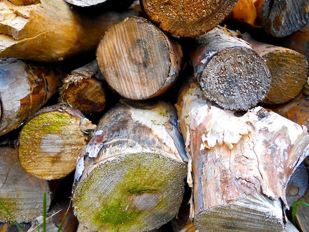 Hintergrund brennholz textur stämme von kiefernholz schneiden orizontal scheiben