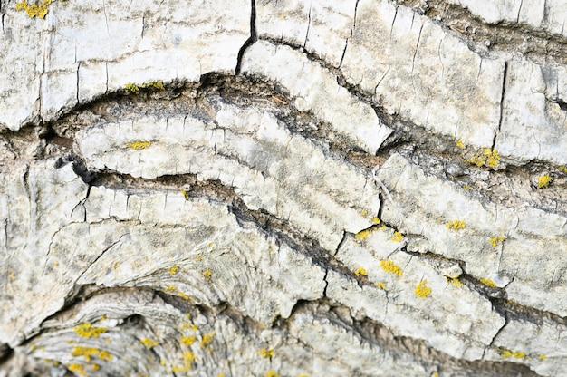 Hintergrund der alten baumrinde, holzige textur