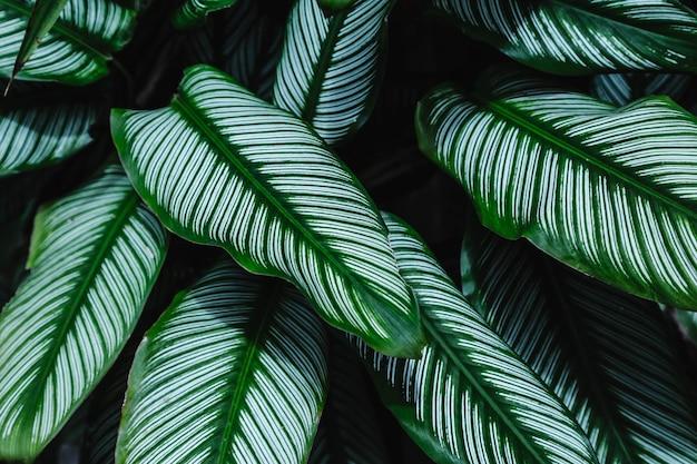 Hintergrund der blätter im immergrünen wald
