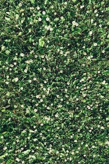 Hintergrund der grünen blätter des blühenden weißen klees draufsichtraums für mitteilung