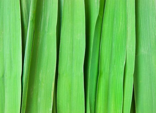 Hintergrund der grünen blätter