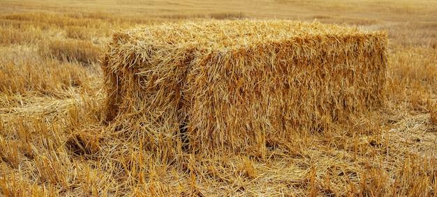 Hintergrund der natürlichen landwirtschaft. nahaufnahme des trockenen heuhaufens im feld.