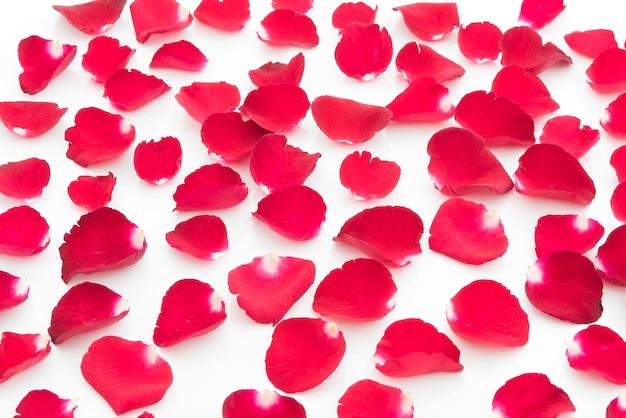 Hintergrund der roten rosen blütenblätter valentinstag