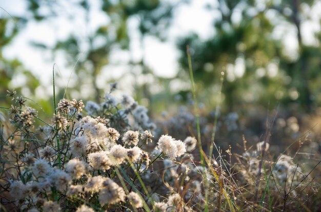 Hintergrund der waldblumen.