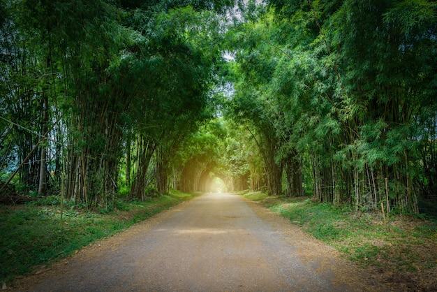 Hintergrund des bambustunnels
