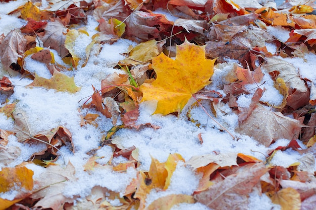 Hintergrund des gelben herbstlaubs im schnee