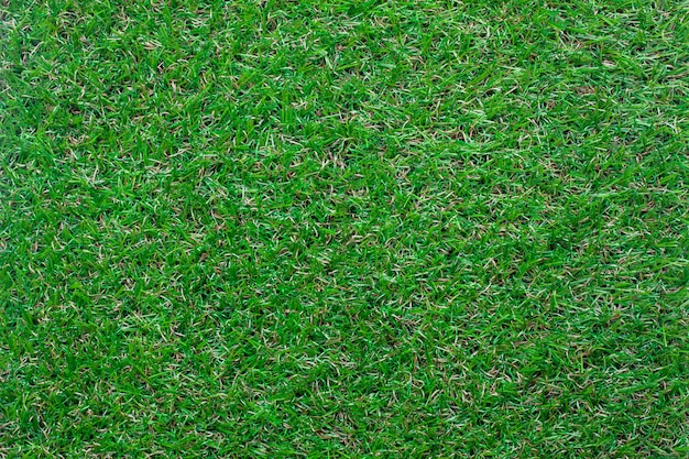 Hintergrund des grünen grases der draufsicht.