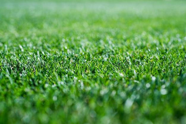 Hintergrund des grünen grases, selektiver fokus. rasen für das training fußballplatz.