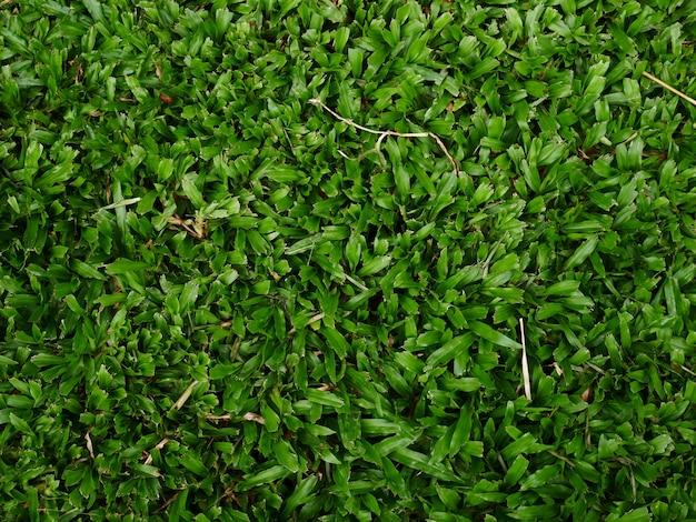 Hintergrund des grünen grases