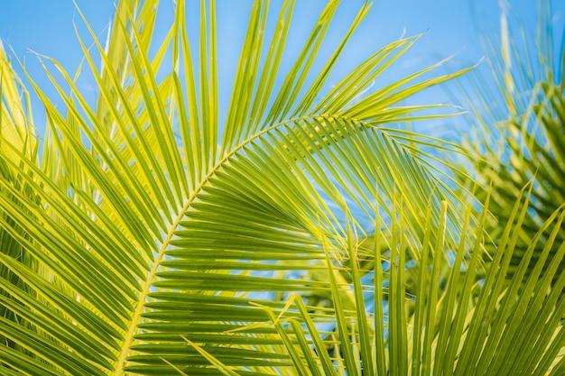 Hintergrund des kokosnussbaums und des blauen himmels