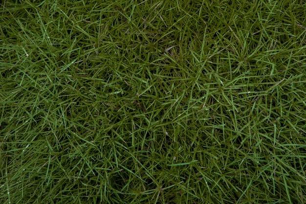 Hintergrund eines grünen grases. grüne grasbeschaffenheit grüne grasbeschaffenheit von einem feld.