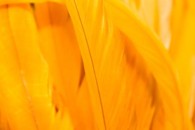 Hintergrund mit bunter karneval versieht beschaffenheit mit federn
