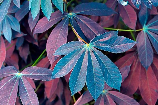 Hintergrund mit dem gemüsemotiv hergestellt von den maniokablättern