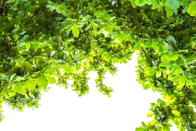 Hintergrund mit grünen blättern
