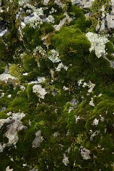 Hintergrund und textur moos wächst auf marmorstein