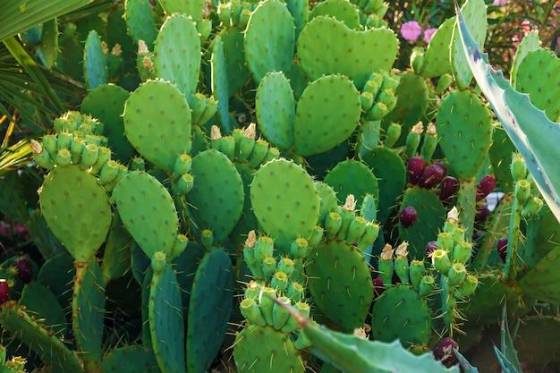 Hintergrund verschiedener kaktusarten, die auf der straße wachsen