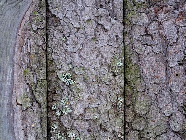 Hintergrund von alten brettern mit rinde und moos