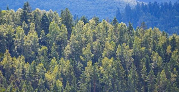 Hintergrund von bäumen verschiedener felsen, die in den bergen wachsen