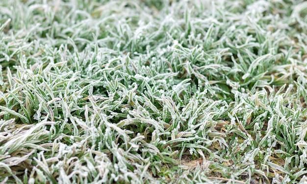 Hintergrund von frost oder heiser auf grünem gras am morgen