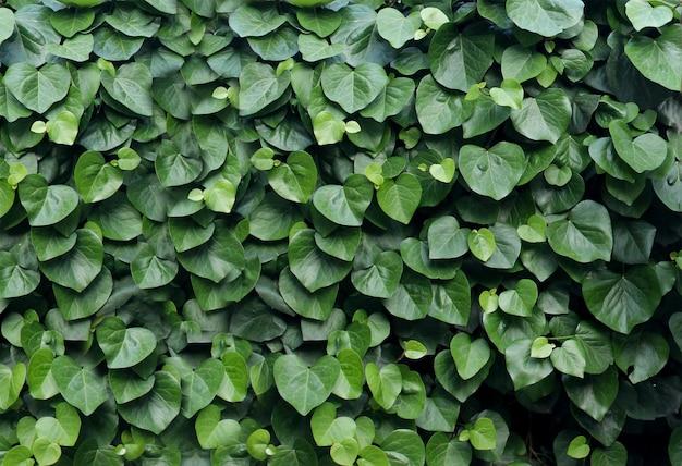 Hintergrund von grünen blättern in form eines herzgrünen blatthintergrundes