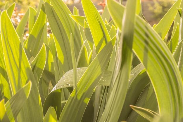 Hintergrund von grünen blättern von blumen