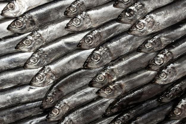 Hintergrund von kleinen fischen