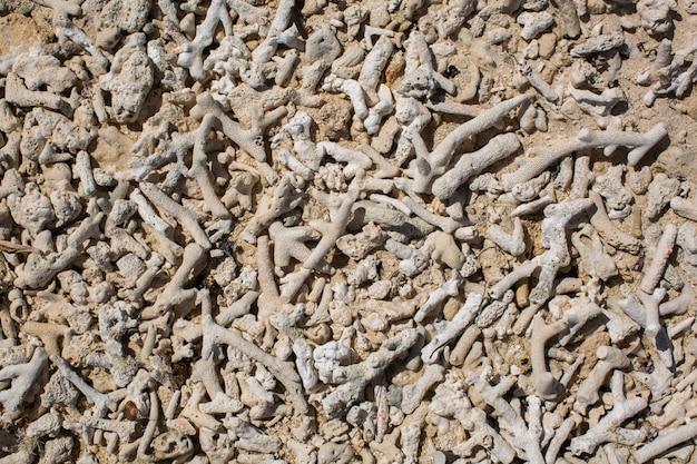 Hintergrund von korallenfragmenten.
