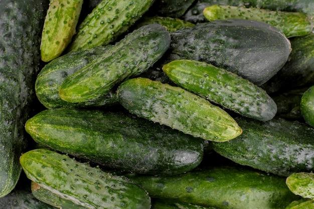 Hintergrund von viel frische grüne gurken. frisches gemüse. sicht von oben
