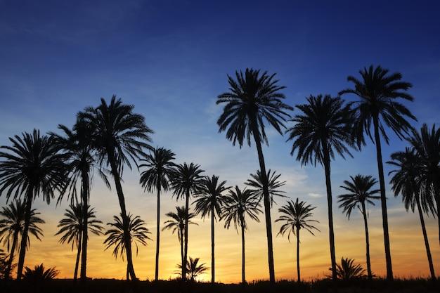 Hintergrundbeleuchtung des goldenen blauen himmels des palmesonnenuntergangs