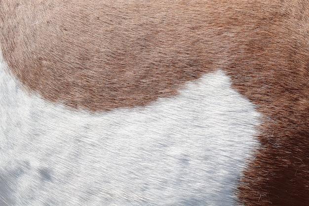 Hintergrundbeschaffenheit der haut und der wolle eines schweins, pferds, kuh.