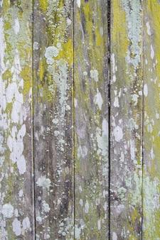 Hintergrundbeschaffenheit des alten holzes mit grünem moos