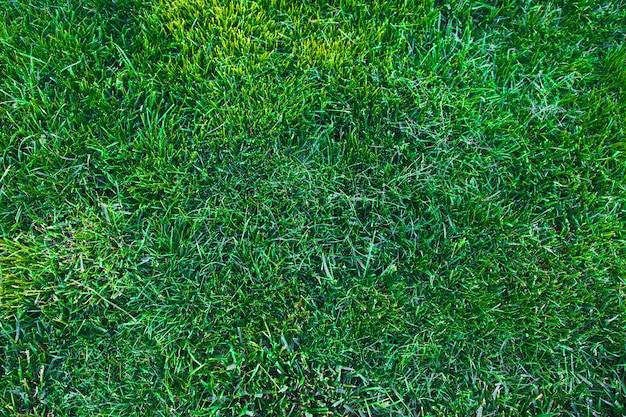 Hintergrundbeschaffenheit des grünen grases. grüner rasenbeschaffenheitshintergrund. ansicht von oben.