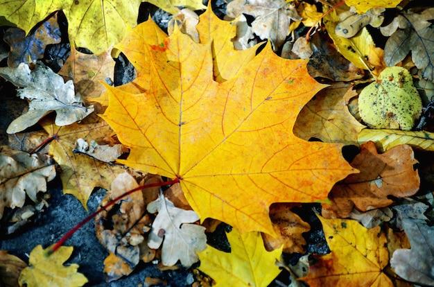 Hintergrundbeschaffenheit des herbstblattes der gelben blätter