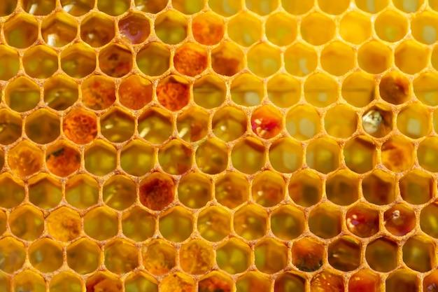 Hintergrundbeschaffenheit eines abschnitts der wachswabe von einem bienenstock, der mit goldenem honig gefüllt wird. imkerkonzept