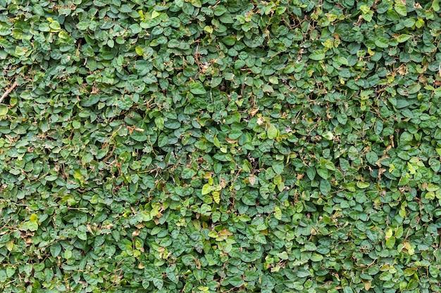Hintergrundbeschaffenheit, grünes gras, draufsicht.