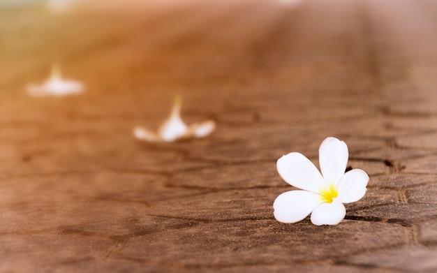 Hintergrundkonzept; weinleseartbild von weißen blumen auf braunem boden.