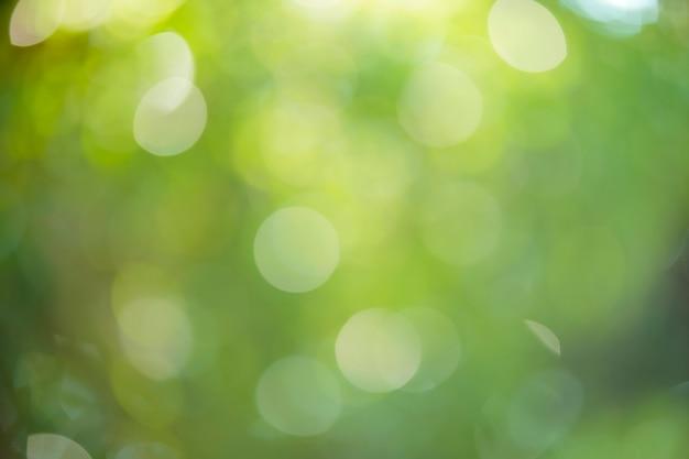 Hintergrundmaterial für runde unschärfe (waldbäume)