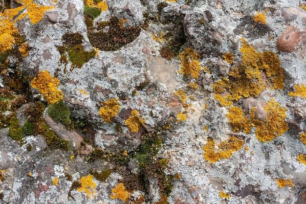Hintergrundtextur mit gelbem, grünem und grauem moos mit flechten auf den steinen. horizontales bild.