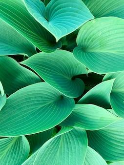 Hintergrundtexturtapete von dekorativen pflanzenblättern studio photo